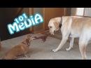 Самые смешные приколы про животных Коты и Собаки Попробуй не рассмеяться