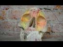 Виктор Цой (Кино) - Группа крови | кавер (скрипка и пианино)