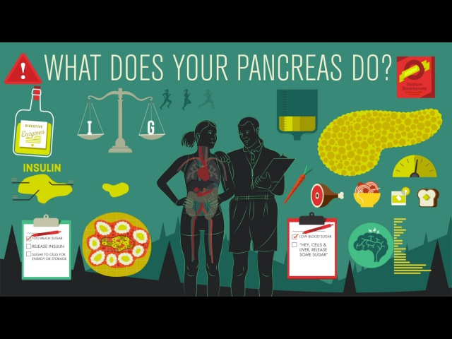 What does the pancreas do Emma Bryce