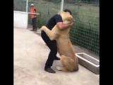 Зачем собачки если есть лев ?