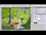Как улучшить качество фото в фотошопе | Улучшаем качество изображения