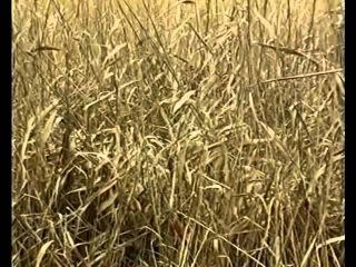 Охота с гончими на лис, выпуск №83 (UKR)