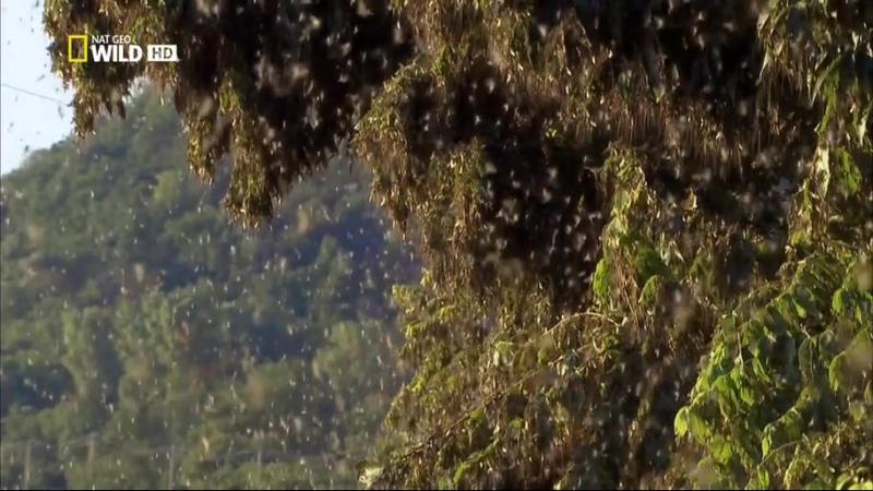 Дикая природа Миссисипи (2011) дельта блюз