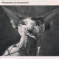 Инна Romashka