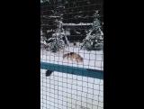 Ижевский зоопарк 5