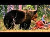 Wild Russia - 4 - Siberia Россия От Края До Края - Сибирь - 3/3