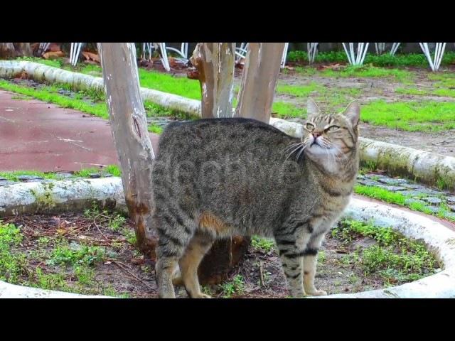 Top 10 CAT