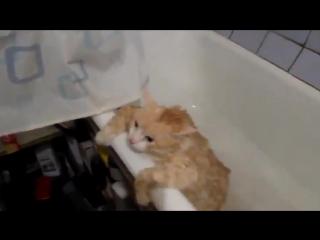 Жирный котэ в ванной