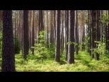 George Winston Forest - (Full Album)