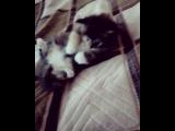 vip_zone_love video