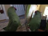Попугай разговаривает сам с собой