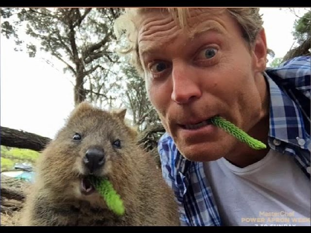 WORLDS HAPPIEST ANIMALl! Rottnest Island's QUOKKAS get a visit from Bondi Vet Dr Chris Brown