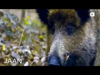 Трогательное видео о взаимопонимании между животными