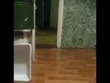 olga.zvery.dressura video