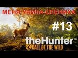 theHunter Call of the Wild #13 МЕНЯ УБИЛА ОЛЕНИХА