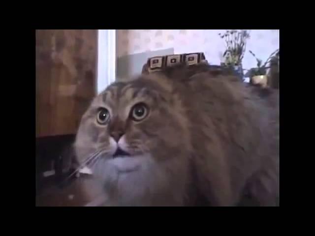 Кот поёт рэп