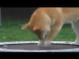 Животные прыгающие на батуте
