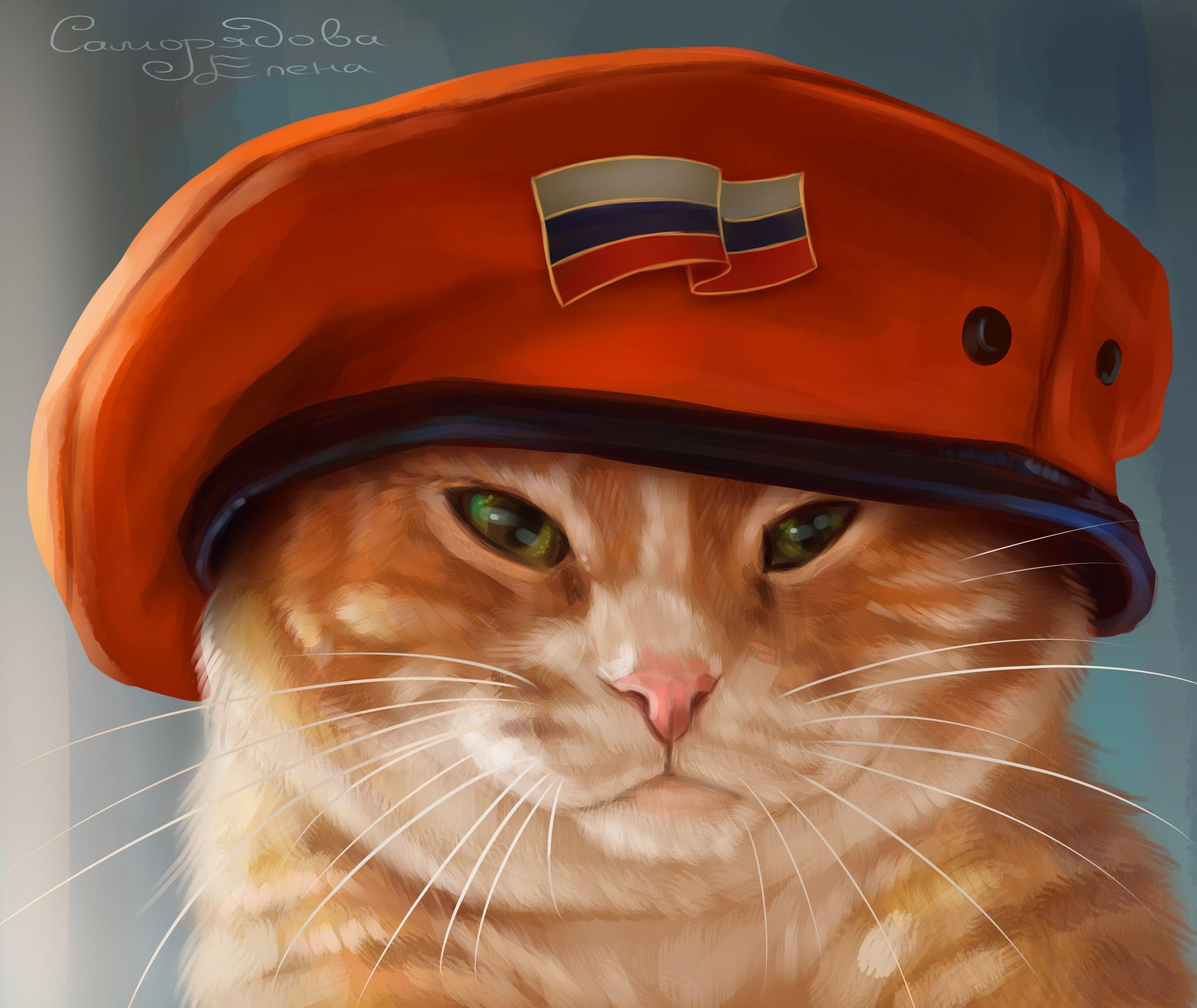 Картинки кот в берете