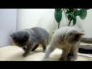 candy-cat-smotret-video
