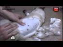 Барнаульские живодёры расстреляли кота