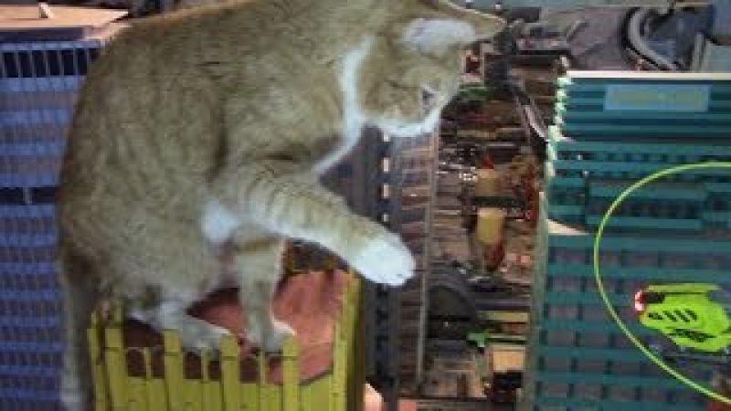 Feline King Kong Attacks New York