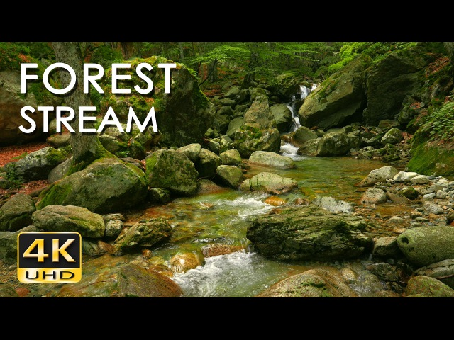 4K Forest Stream - Relaxing River Sounds - No Birds - Ultra HD Nature Video - Relax/ Sleep/ Study