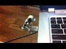 Обзор - USB собака ебака флешка собачка трахается - Sexy DOG/Humping DOG