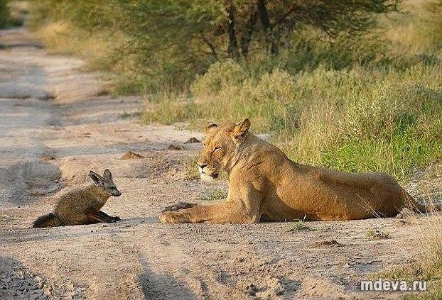Даже диким животным не чуждо сострадание