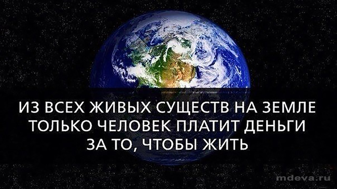 Только человек платит деньги за то, чтобы жить на Земле