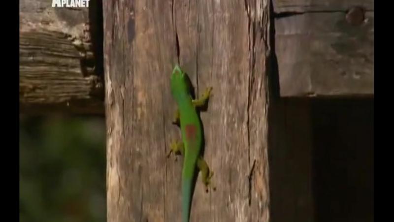 Необычные животные Ника Бейкера - Невидимая ящерица