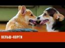 Вельш корги Планета собак спешит на помощь 🌏 Моя Планета