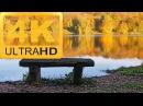 30 min ❀ 4к 4k UHD релакс видео и музыка ❀ Осенний лес ❀