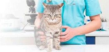 Ветеринарная аптека г Данков ,Мичурина1,телефон 8 999 750 89 37