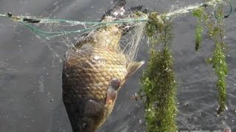 Вот это РыбалкаТы не поверишьЭту страну не победить201795