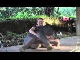 Слоник завалил девушку - Elephant flunked Woman