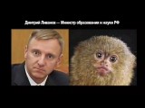 Юмор. Забавные сходства. Политики России. Прикольные фото. Смешное видео