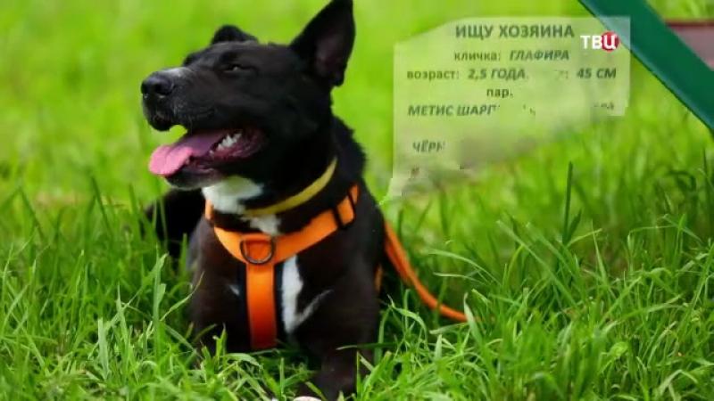 Собака Глафира из приюта Бирюлево ищет дом!