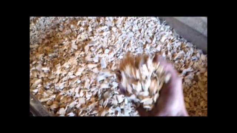 Измельчитель древесины 1. Однородная щепа. 89061999883. Wood chipper homogenous chips.