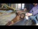 Реакция обезьяны на фокус )) Смешно до слез