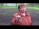 Лук Шалот агротехника полный цикл от посадки до хранения