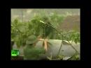 Вьетнам раны войны — РТД Фильмы