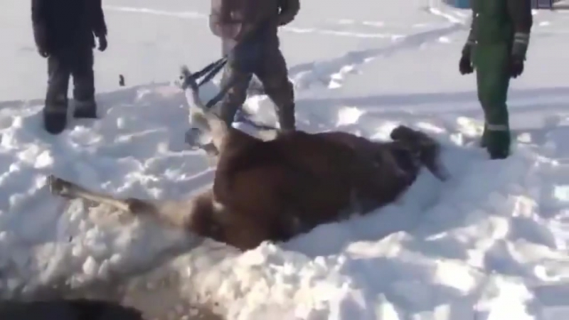 5 ДОБРЕЙШИХ ПОСТУПКОВ. Люди спасают животных от смерти