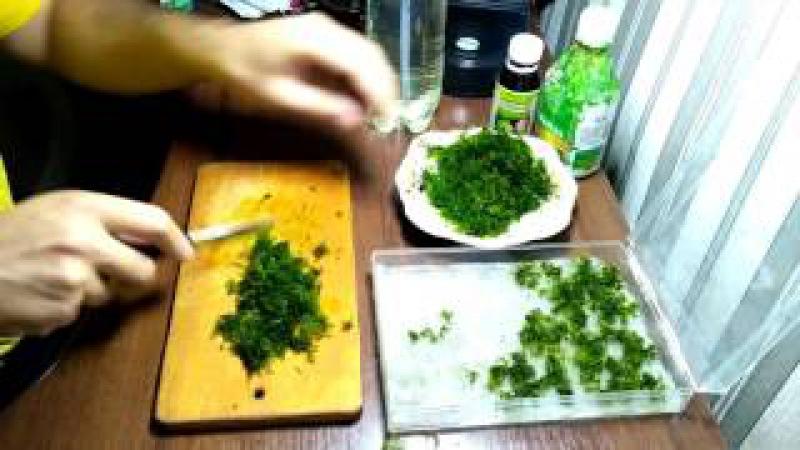 Как высаживать яванский мох Java Moss / How to plant java moss Java Moss
