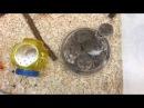 ハムスターの「ホイホイ動画」がみっちりモフモフで癒されるlv-reig