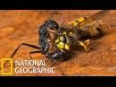 Спецвыпуск Войны насекомых ! Документальные Фильмы с National Geographic