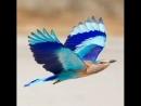 Ни когда не видела таких птиц и даже не знала о их существовании .просто отдыхаешь !!!