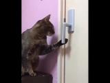 кот открывает дверь