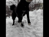 Ловим мячик