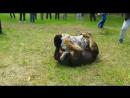 Тестирование молодых волкодавов