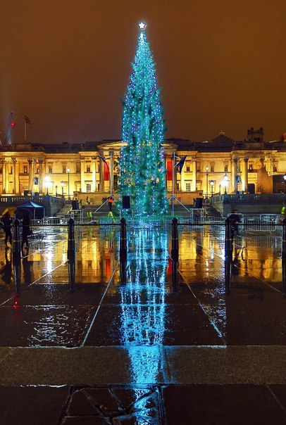 Самые красивые новогодние деревья со всего мира#женская_школа_бизнес